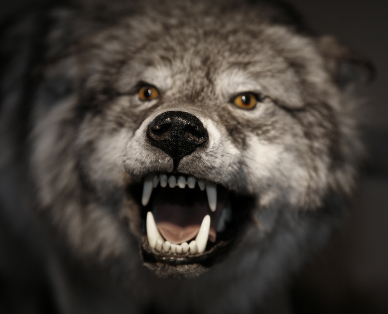 Leaders who cry wolf may leave their flock to be eaten