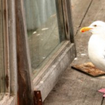 Holding a Seagull Manager Accountable & Fixing the Behavior